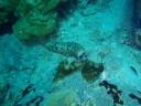 Sea cucumber having a meal